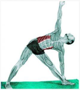 stasi-trigwno-stretching-mywn