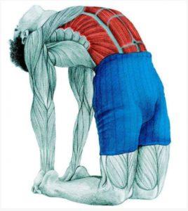 stretching-stasi-kamilas