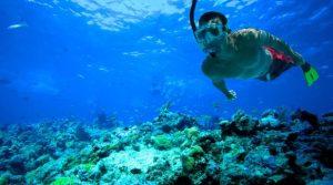 snorkeling thalassia sport