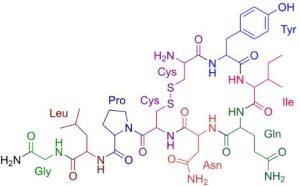 oxytocin hormone