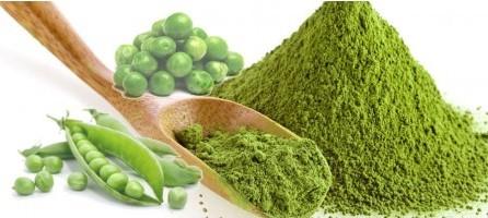 πρωτεΐνη αρακά