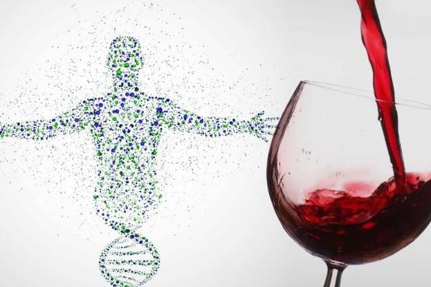 κατανάλωση κόκκινου κρασιού και αυξημένο μικροβίωμα